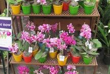 New Displays at Al's / als-gardencenter.com