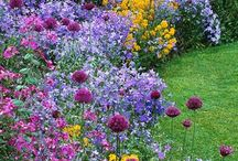 Favourite Gardens / My favourite gardens from vegetable to flowers and everything inbetween
