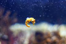 Sea horses/ jelly fish