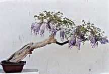 Bonsai. Kokedama & Kusamono. Hangin'Garden