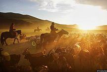Mongolia / Travel