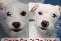 Shelter Pets  / by Pet Talk With Dr. B