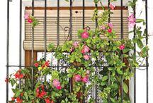 Flores, ervas e jardins/ Flowers & gardens