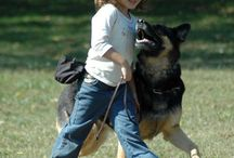 Schutzhund / Dog training