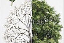 Trees as medicine