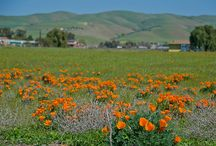 Livermore Valley / All about the wineries and events of Livermore Valley