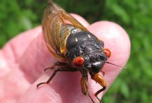Insects & Spiders in the Metro Parks / No need to be afraid; these creatures are more helpful to us than harmful.