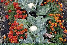 zelenina verzus byliny ochranárky