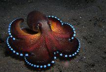 Bad Ass Ocean Life