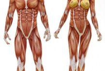 CH_anatomy
