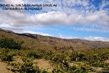 #Vendimia2014.#Enoturismo #Sorvilán. / Fotos que hemos compartido en nuestras redes sociales de la vendimia en la Sierra La #Contraviesa. #Alpujarra. #Enoturismo Al sur de #Granada.