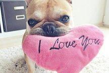 귀여운 개