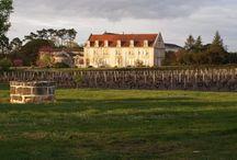 Domaine de la Solitude / Visite du vignoble et des chais au Domaine de la Solitude à Pessac Léognan Bordeaux Réservez avec winetourbooking.com