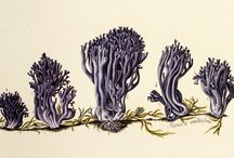 Mysterious Mushrooms
