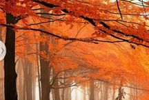 Autumn / by LaTisa