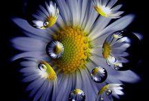 Flower / by Sandhya