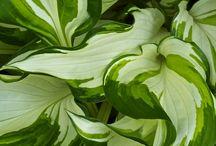 plantas naturais