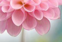 The essences of flower