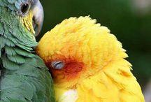 papoušek / papoušek