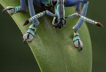 Badass Bugs