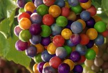 colorful foods