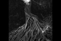 Tree Of Life / by Jillian Boshart