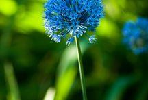 Flowers  / by Belkys Trujillo