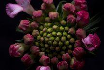 flores , plantas, jardines / Es maravilloso contemplar la belleza natural