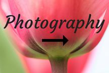 Photography / How to photograph tulips and other flowers. See more on www.tulipsinholland.com