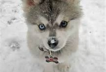Cachorros Cute