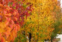 Plants - Ornamental Trees / Trees - from small trees suitable for containers to large native trees