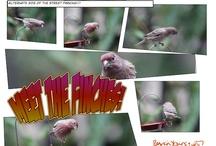 My Bird AND Garden-Themed Comic Strips