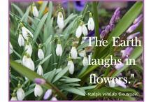 Spring Blooms / by Judy Vardon