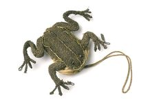 FROG-FORM / Frogs - design and art. It's all about FROGS.
