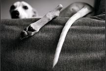 just whippets