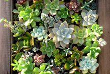 gardening and plantation