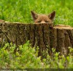 Wildlife / Britain's varied and amazing wildlife