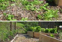Garden - self sufficient - ideas