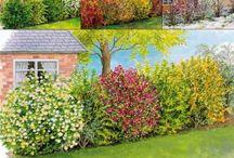 Basic garden planning