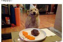 Funny animals pic