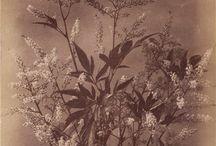 19th century photographs