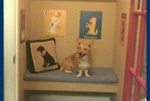 Doggie kennel ideas