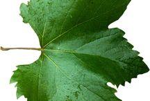 Plantes-feuilles