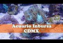 Videos de México
