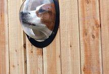 Doggy yards, treats, hints and tips