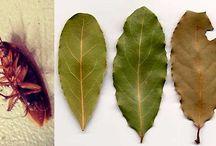 Fumigacion natural para rastreros