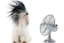 Air Conditioner & Cooling / Useful air conditioner articles for homeowners.