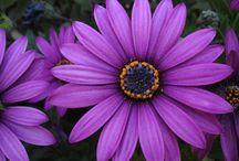 Garden Delights / by Esther Sullivan