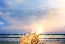 phuket shell