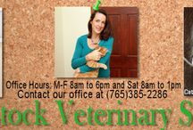 Indiana Veterinarians Who Are Qualified to Practice Holistic Veterinary and Integrative Medicine / http://www.bestcatanddognutrition.com/roger-biduk/list-of-900-u-s-holistic-integrative-veterinarians/